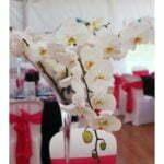 Orchidée papillon centre de table